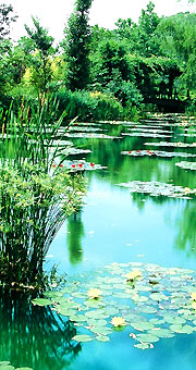 Copie des jardins de Monet au Japon
